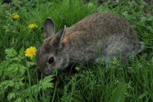 Ohren reinigen bei Kleintieren